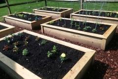 box-garden